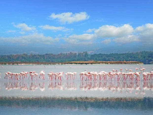 flamingo_getty.jpg