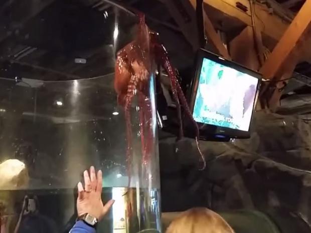 octopus-escape-tank-seattle.jpg