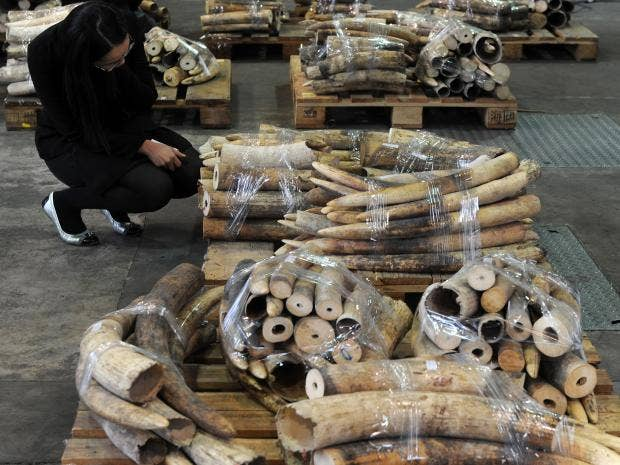 Chinese-Ivory-Trade-AFP-Getty2.jpg