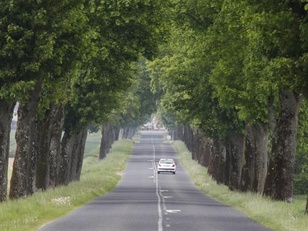 22-Napoleon-Trees-AFPGet.jpg