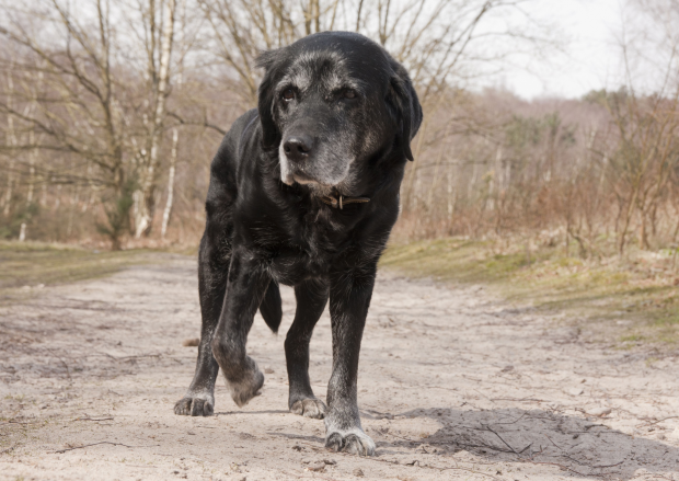 Witness the final walk of a dog and know all you need to ...