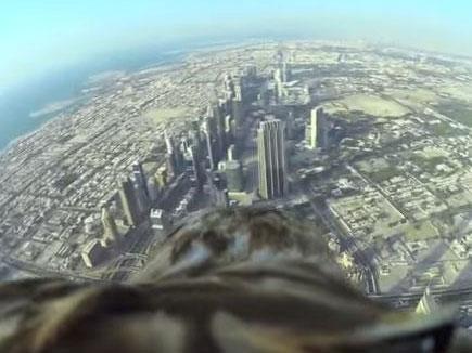eagle-flight-dubai.jpeg