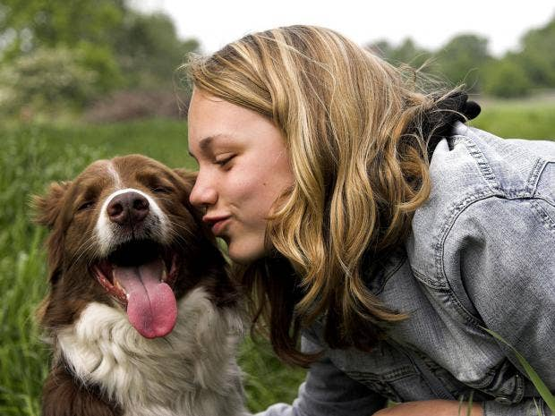 Why Do Dogs Lick Each Other So Much