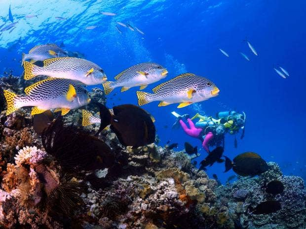32-Barrier-Reef-Alamy.jpg