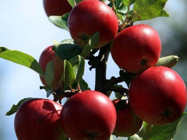 26-Cider-Apples-Get.jpg