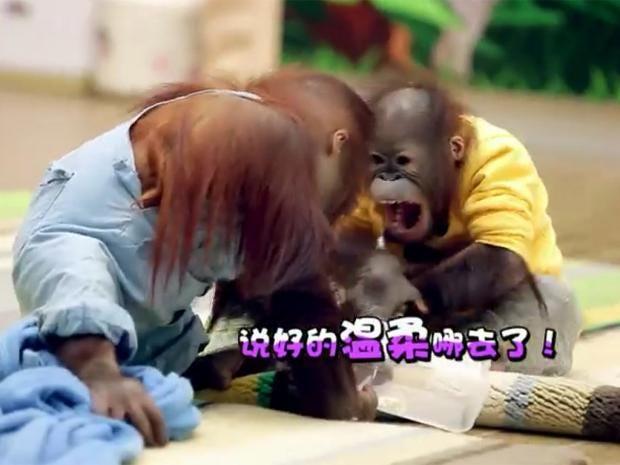 pg-26-china-animals-1.jpg