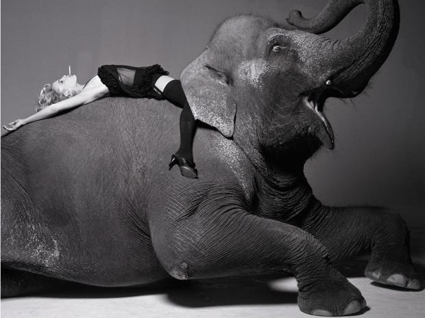 lumas-fashion-photography-elephant.jpg