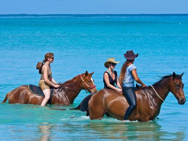 horses-alamy.jpg