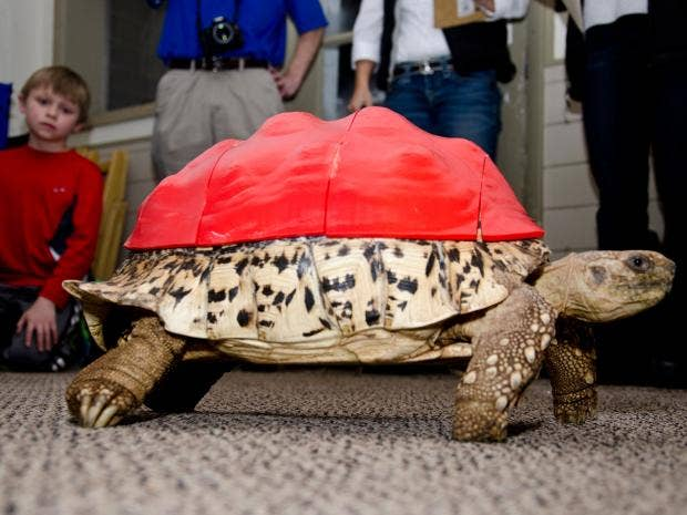 web-Cleopatra-Tortoise-Corbis.jpg