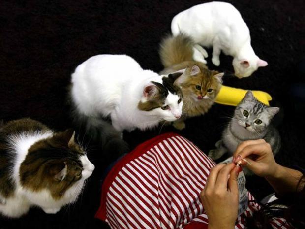 cats_getty.jpg