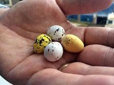 Killer-eggs.jpg