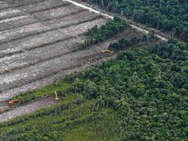 deforestation-Getty.jpg