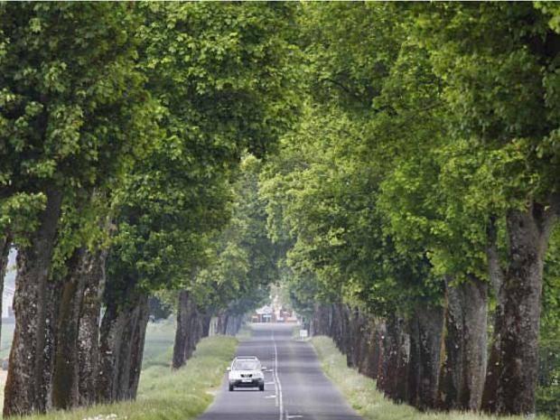 trees_france_getty.jpg