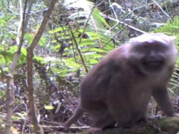 21-monkey-newscientist.jpg