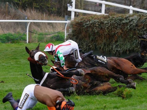 horses-fall.jpg