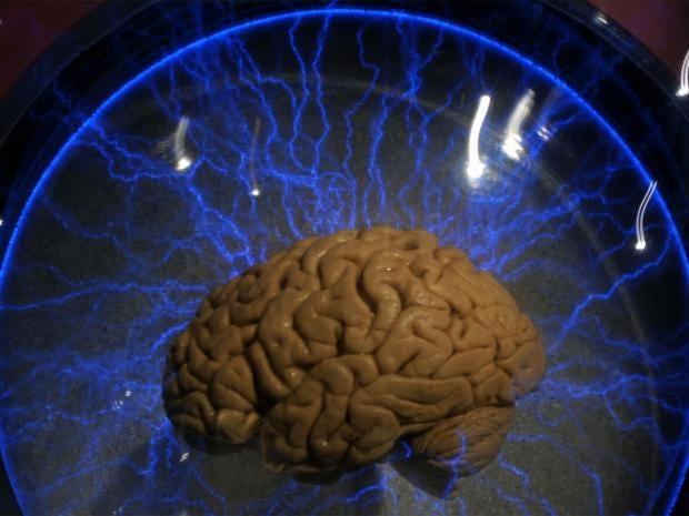 brain-2-i100.jpg