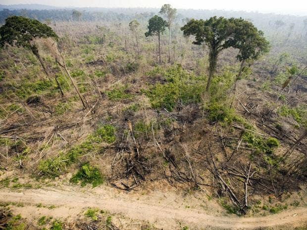 burnt-rainforest-afp.jpg