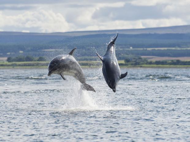 17-Bottlenose-Dolphin-Rex.jpg