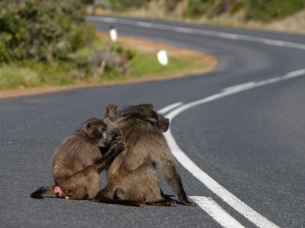 18-South-Africa-EPA.jpg
