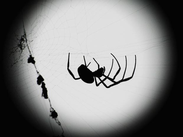 orb-spider-getty.jpg