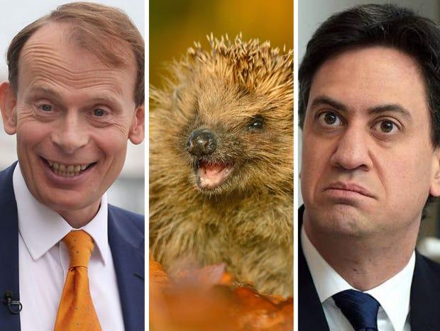Marr-Hedgehog-Miliband.png