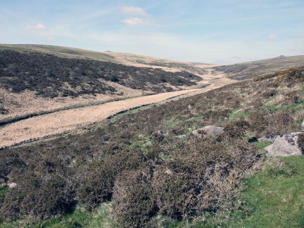 dartmoor-rex.jpg