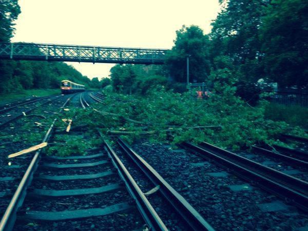 tree-on-tracks.jpg
