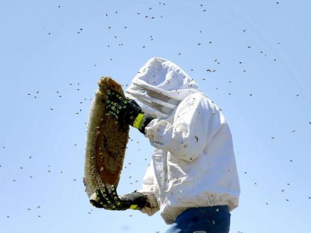 bee-removal.jpg