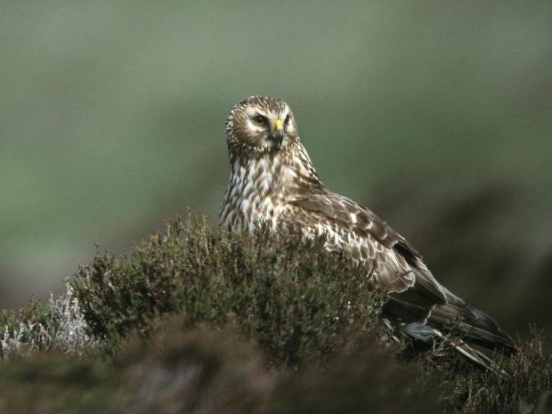 owl-andy-hay-rspb-p11.jpg