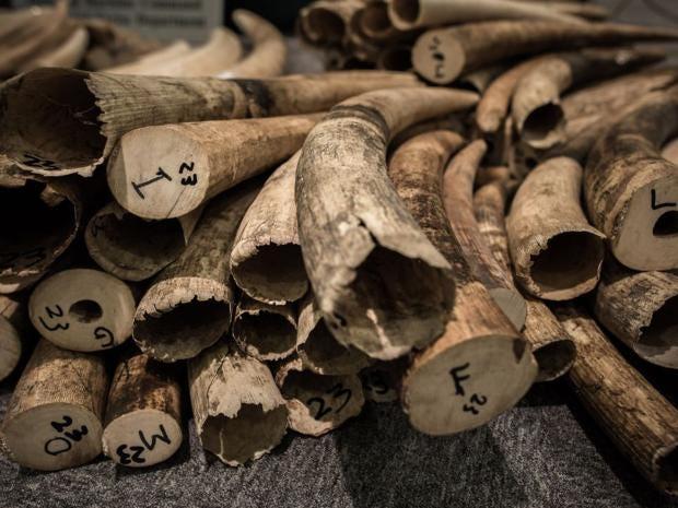 19-Ivory-Tusks-AFPGet.jpg