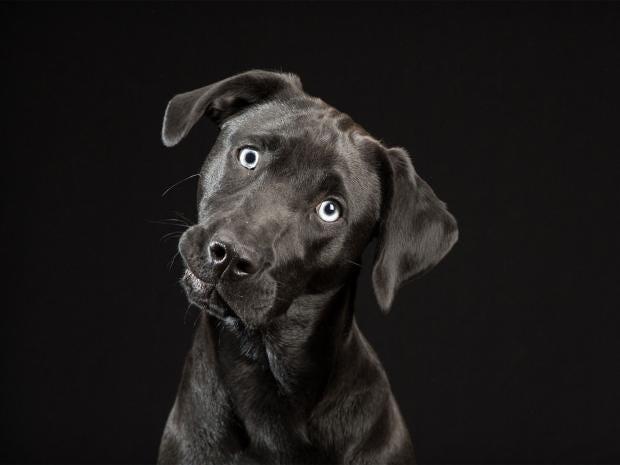 black-dog-project-11.jpg