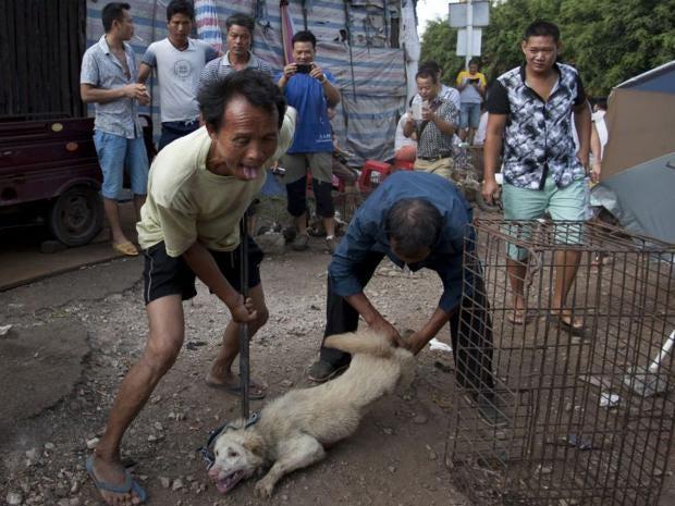 25-China-Dog-EPA.jpg