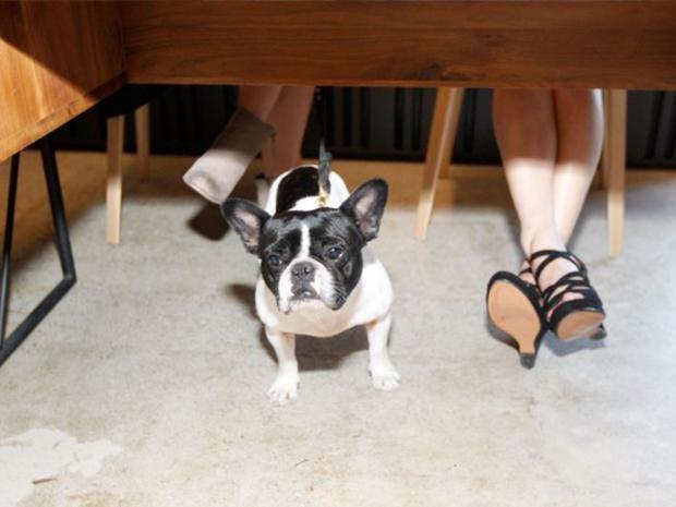 38-Employee-Dog-Get.jpg