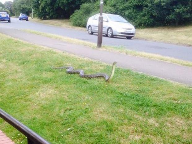 Snake-Facebook-grab.jpg