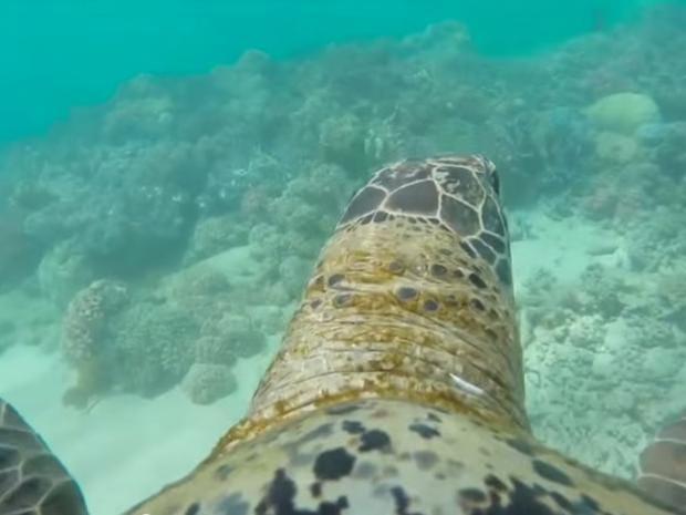 turtle-crop.jpg