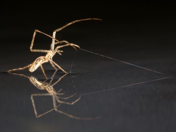 spiders-pa_1.jpg