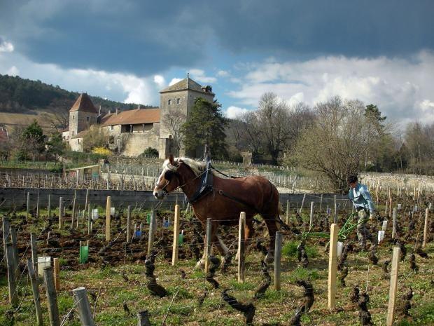 23-Winegrower-AFP-Getty.jpg