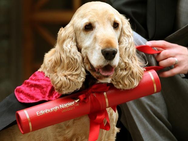 dog-graduation-pa.jpg