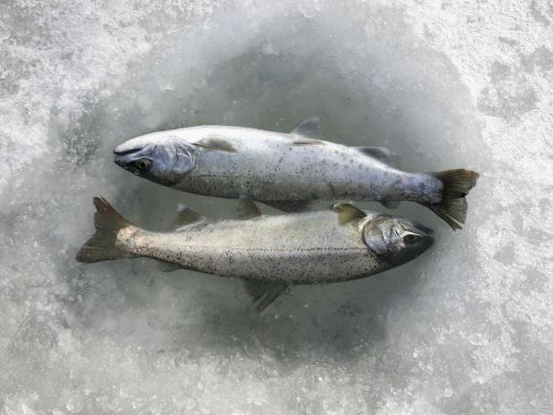 41-South-Korean-Anglers-Getty.jpg
