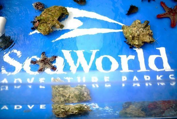 web-seaworld-getty.jpg