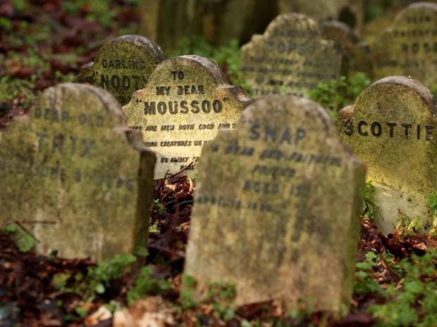 pet-cemetery-getty.jpg
