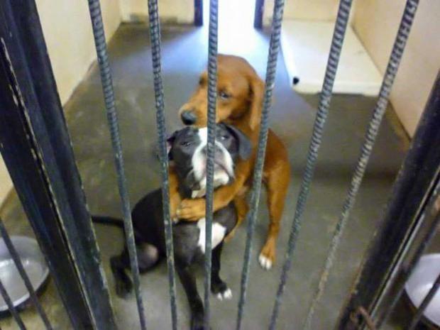 hugging-dogs.jpg