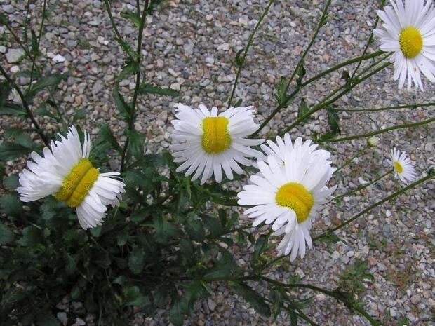 Mutant-flowers.jpg