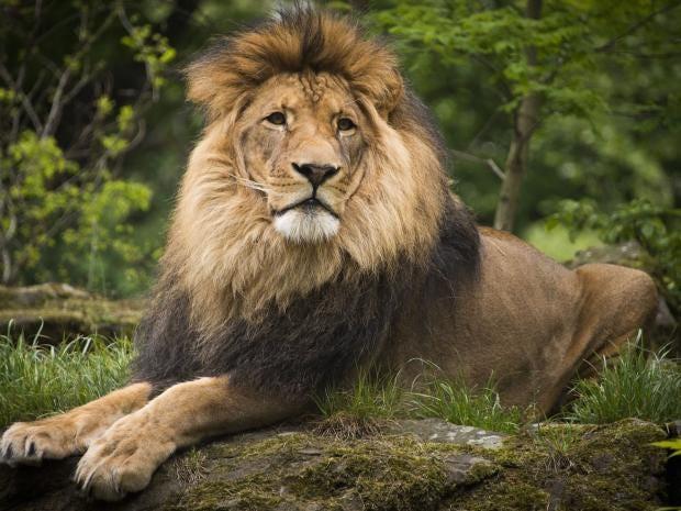 lion.jpg