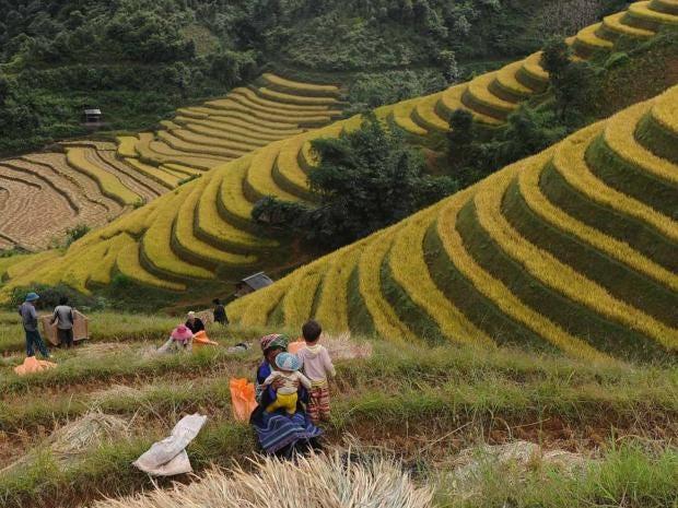 vietnam-afp.jpg