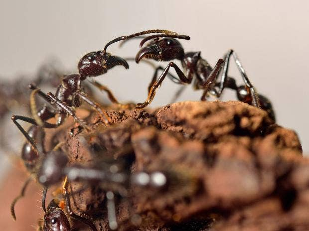 web-ants-1-getty.jpg