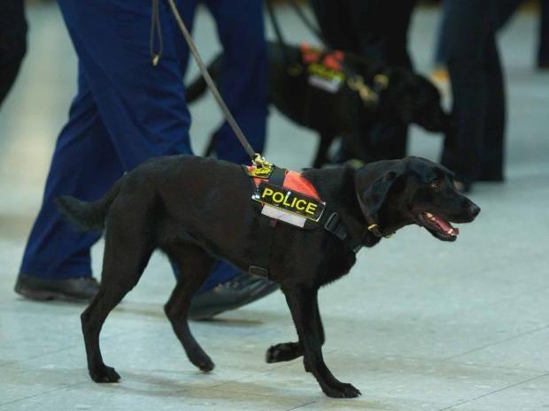 police-dog-afp.jpg