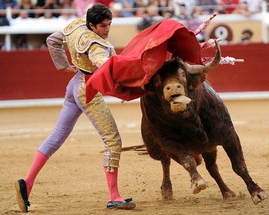 a description of bullfighting a tradition art and athletic sport combined in one Bullfighting essaysbullfighting is a tradition, art and athletic sport combined in  one bullfighting originated in the classical world the first bullfights supposedly.
