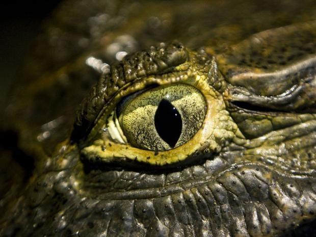 Eyes-AFP.jpg