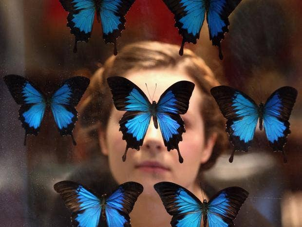short essay on butterfly for kids Birds english essay- short essay on ← a little bird nursery rhyme-a little bird english poem for kids butterfly nursery rhyme- butterfly english poem for kids.